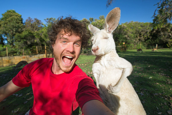 PIC BY @DAXON / CATERS NEWS - (PICTURED: Allan Dixon takes selfie with albino kangaroo) This real-life Dr. Dolittle walks with the animals, talks with the animals, and... TAKES SELFIES with them. Traveller Allan Dixon has amassed a hilarious collection of shots with a variety of exotic creatures. Included in the 29-year-olds collection are smiling snaps with the likes of kangaroos, quokkas, camels and sea lions. In some of the shots, Allan, who is originally from Wicklow, Ireland, can even be seen in festive poses, placing a Santa hat on himself or his furry friends. - SEE CATERS COPY