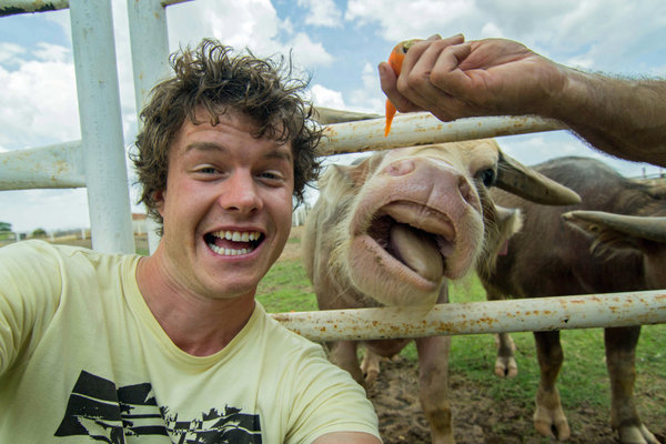PIC BY @DAXON / CATERS NEWS - (PICTURED: Allan Dixon takes selfie with cow) This real-life Dr. Dolittle walks with the animals, talks with the animals, and... TAKES SELFIES with them. Traveller Allan Dixon has amassed a hilarious collection of shots with a variety of exotic creatures. Included in the 29-year-olds collection are smiling snaps with the likes of kangaroos, quokkas, camels and sea lions. In some of the shots, Allan, who is originally from Wicklow, Ireland, can even be seen in festive poses, placing a Santa hat on himself or his furry friends. - SEE CATERS COPY