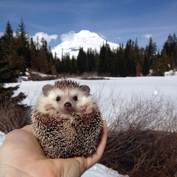 biddy-cute-hedgehog-adventures-14