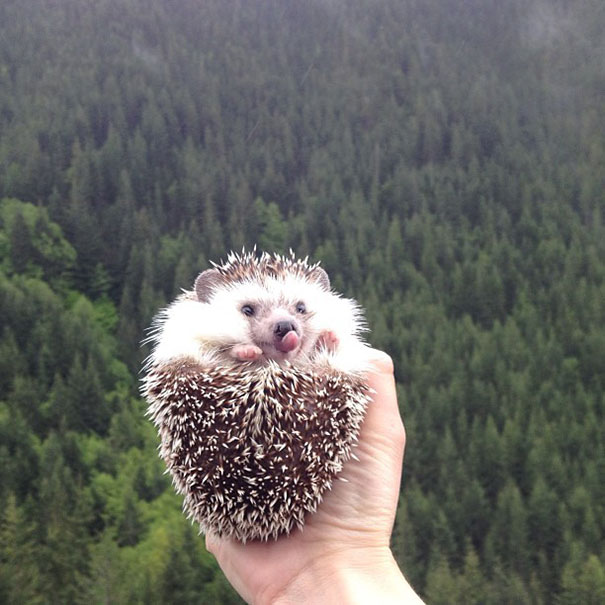 biddy-cute-hedgehog-adventures-21