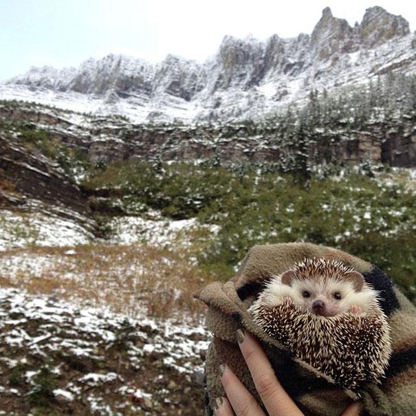 biddy-cute-hedgehog-adventures-4