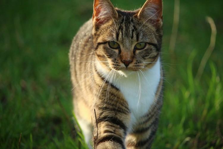 cat-1074981_1920