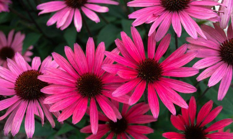 flowers-1283770_1920