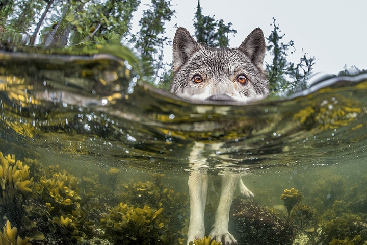 national-geographic-2015-5