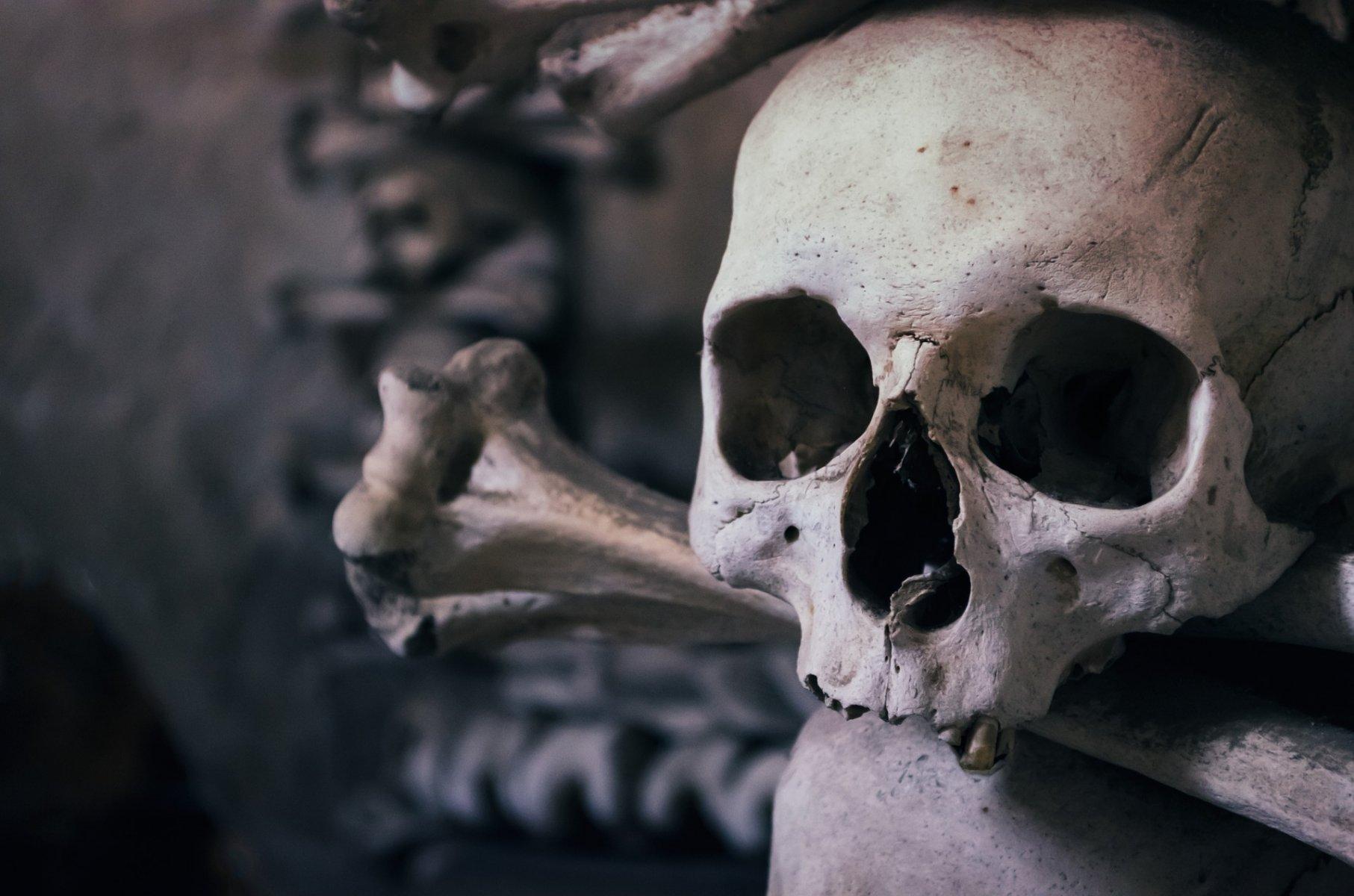 skull-726253_1920