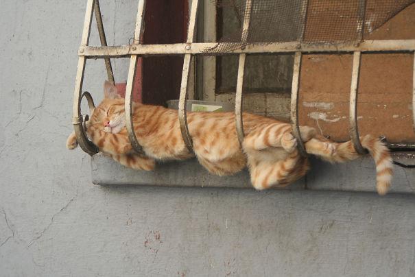 sleeping-cats-135-57d10a4311816__605