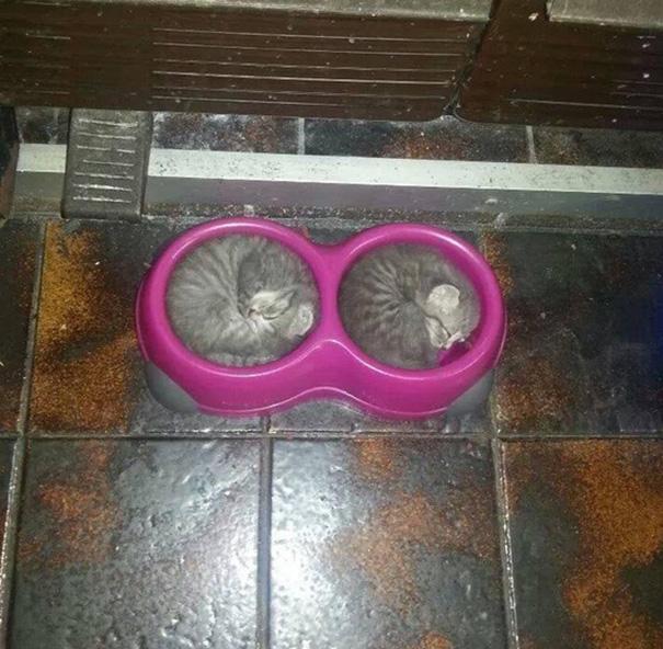 sleeping-cats-190-57d133231a71f__605