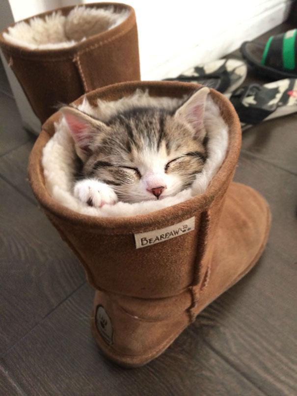 sleeping-cats-22-57ce77baf3c5b__605