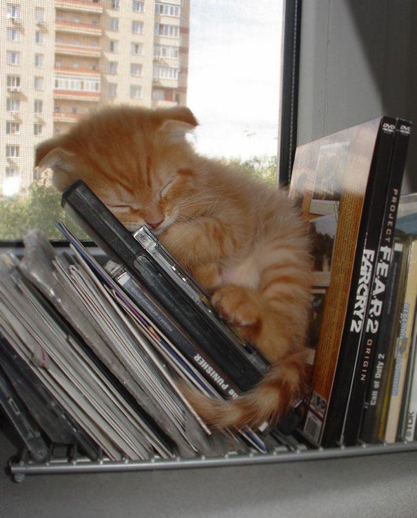 sleeping-cats-23-57ce77be75f8b__605
