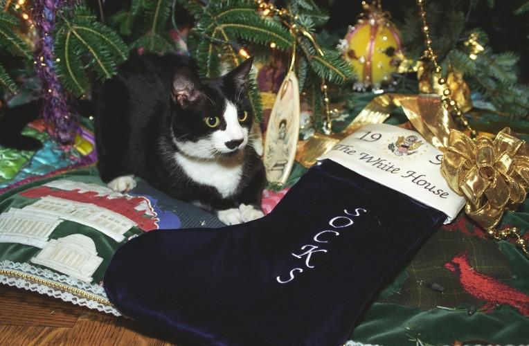 socks-the-cat-1084179_1280