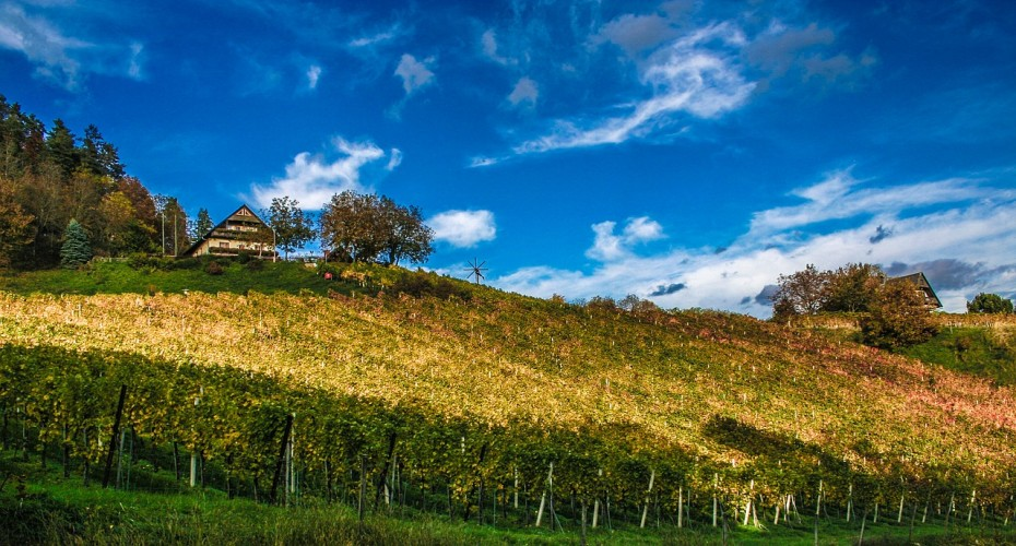 vineyard-770689_1280