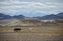 mongolsko